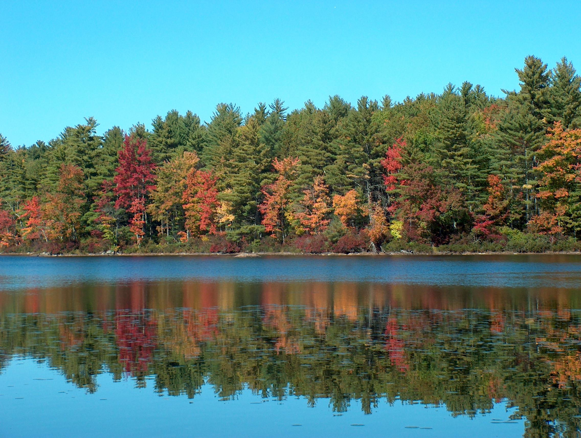 Autumn leaves, Deering Pond.